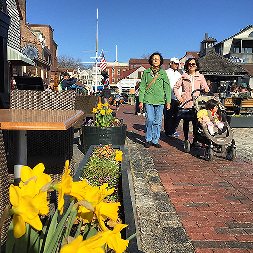 Daffodil Days Festival Newport Rhode Island Bowens Wharf